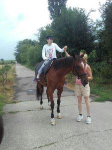 pferd zur verfügung